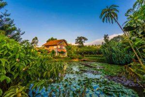 Kebun Mawar Situhapa Hotel/ Foto : traveloka.com