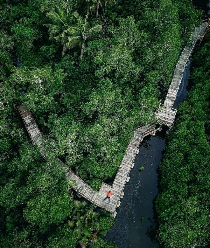 Taman Wisata Hutan Mangrove Pariaman / Foto instagram @pariaman24jam