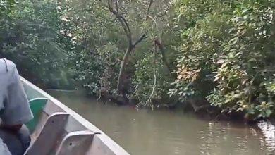 Bersampan di hutan mangrove pantai Muara Gembong, Bekasi. (instagram agungsulis775)